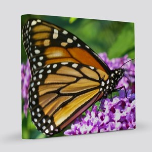 monarch butterfly 8x8 Canvas Print