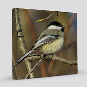 Chickadee bird 8x8 Canvas Print