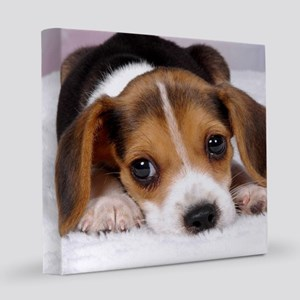 Cute Puppy 8x8 Canvas Print