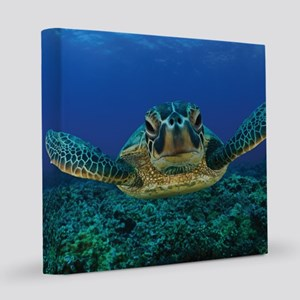 Turtle Swimming 8x8 Canvas Print