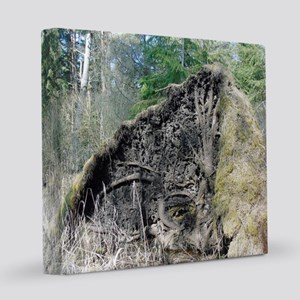 Fallen trees in forest. Storm dam 8x8 Canvas Print