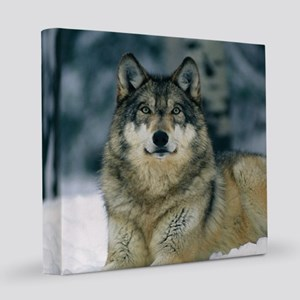 Wolf In The Snow 8x8 Canvas Print