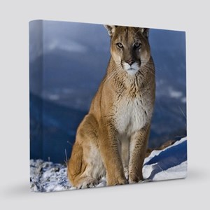 Puma During Winter 8x8 Canvas Print