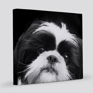 Shih Tzu Dog 8x8 Canvas Print