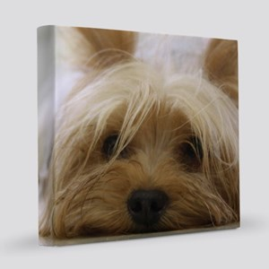 Yorkie Dog 8x8 Canvas Print