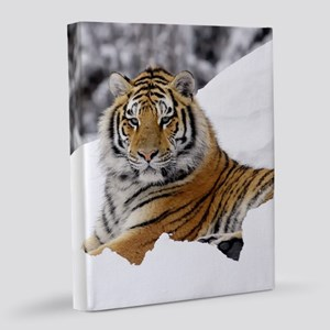 Tiger In Snow 8x10 Canvas Print