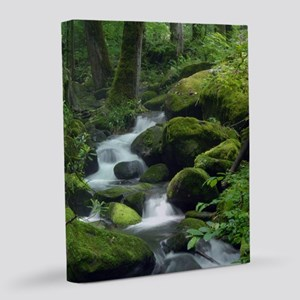 Summer Forest Brook 8x10 Canvas Print