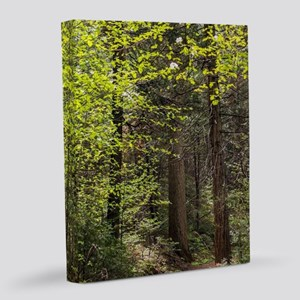 Forest Trail 8x10 Canvas Print