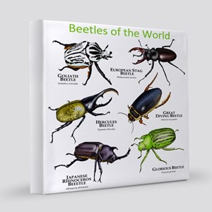 Beetles of the World 12x12 Canvas Print
