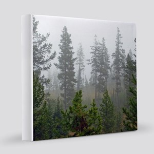Misty forest 12x12 Canvas Print