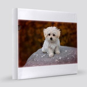 Maltese Puppy...Adorable 12x12 Canvas Print
