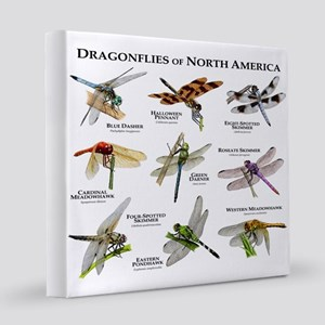 Dragonflies of North America 12x12 Canvas Print