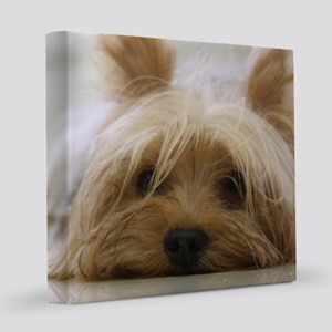 Yorkie Dog 12x12 Canvas Print