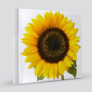 Sunflower  12x12 Canvas Print
