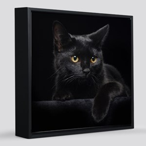 Black Cat 12x12 Canvas Print