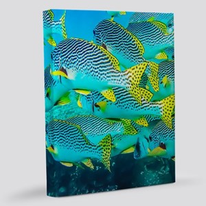Fresh Ocean Fish 11x14 Canvas Print