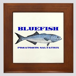 Bluefish - Pomatomus Saltatrix Framed Tile