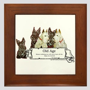 Old Age Scottish Terriers Framed Tile