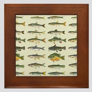 Freshwater Fish Chart Framed Tile