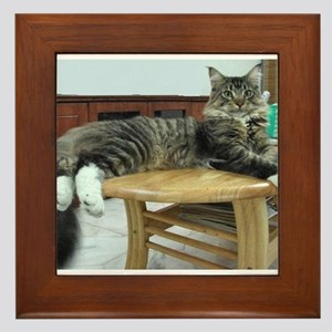 maine coon laying 2 Framed Tile