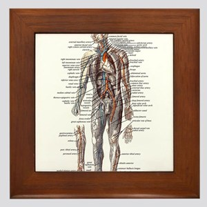 Anatomy of the Human Body Framed Tile