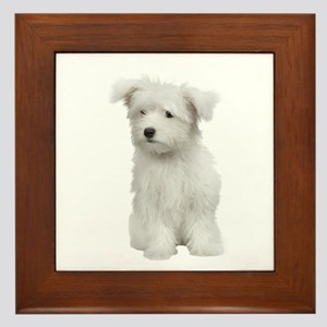 Maltese Picture - Framed Tile