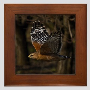 (15) Red Shouldered Hawk Flying Framed Tile