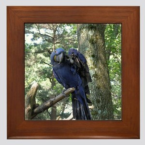 Blue Macaw in a Tree Framed Tile