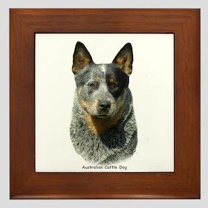 Australian Cattle Dog 9F061D-04 Framed Tile