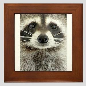 Raccoon Framed Tile