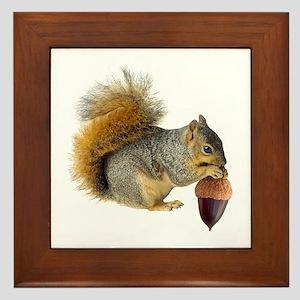 Squirrel Eating Acorn Framed Tile