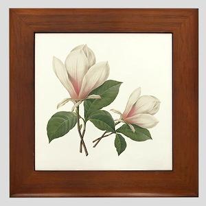 Vintage botanical art, elegant magnolia flower. Fr
