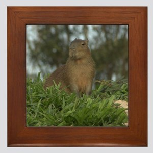 Young Capyvara Framed Tile