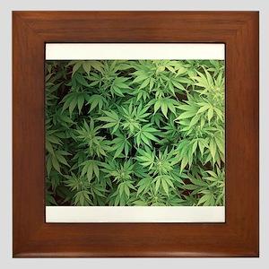 Marajuana Weed Pot Framed Tile