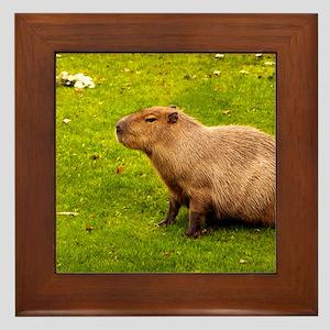 Capybara Framed Tile