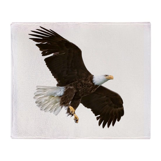 Amazing Bald Eagle
