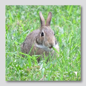 bunny rabbit Photo Wall Tile