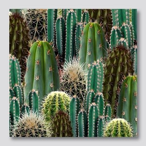 CACTUS PATCH Photo Wall Tile
