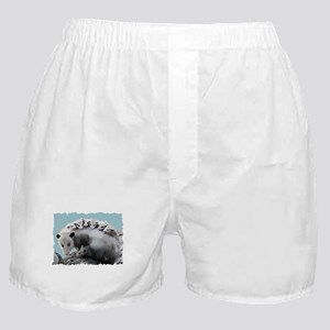 Possum Family on a Log Boxer Shorts