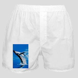 99c7552d49d8 Blue Whale Underwear & Panties - CafePress