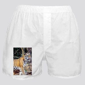 Tiger in the woods Boxer Shorts