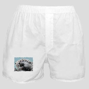 Possum Family on a Log Boxer Shorts