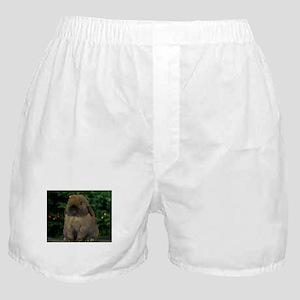 Christmas Bunny Boxer Shorts