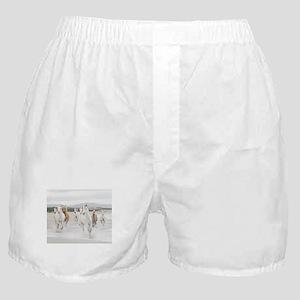 Horses Running On The Beach Boxer Shorts