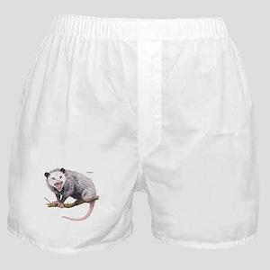 Opossum Possum Animal Boxer Shorts