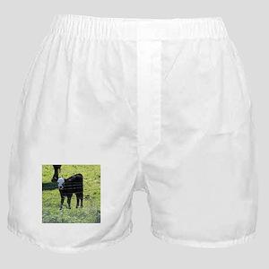 Calf Boxer Shorts