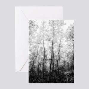Aspen Tree Forest, Black & White Photography Greet