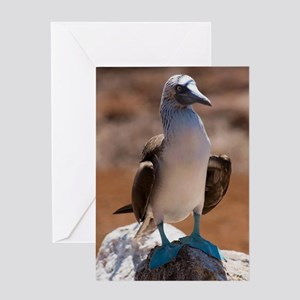 Blue-footed Booby Greeting Cards