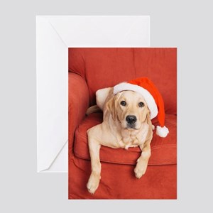 Dog with Christmas hat on armchair Greeting Cards
