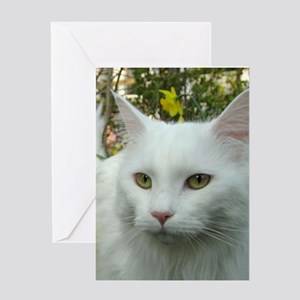 maine coon fourth white Greeting Cards